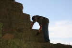making hay - cutting bales open