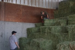 moving hay around